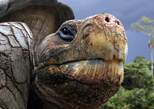 Volunteering on the Galapagos Islands
